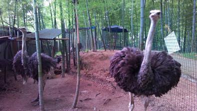 就去永康动物乐园看千奇百怪的动物兄弟!